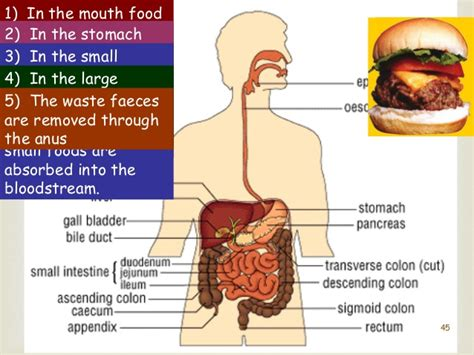 what it means when your liver enzymes are picture 12