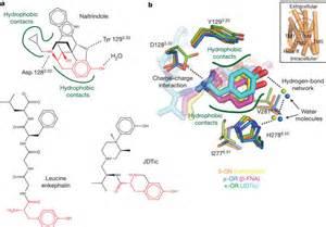 what supplement binds to opiate receptors picture 9