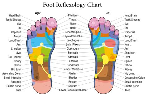 feeet reflexology and sexual arousal picture 13