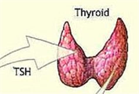 thyroid suppressed picture 6