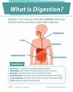 digestive system 8th grade picture 9