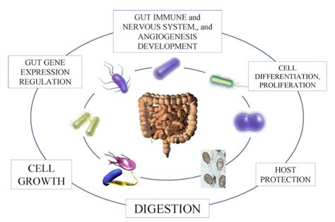 do probiotics give you energy picture 10
