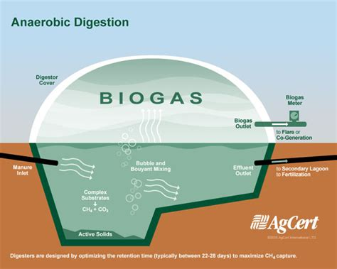 anaerobic digestion picture 2