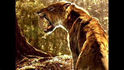 saber tooth tiger picture 15