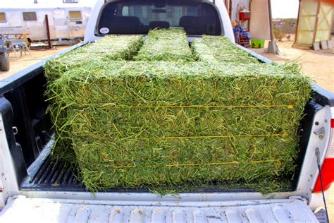 3 string alfalfa bales for wholesale in texas picture 9