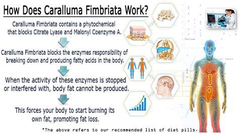 caralluma fimbriata safe for diabetic picture 1