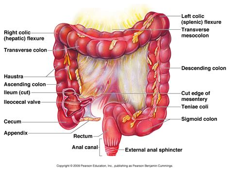 gastrointestinal illnesses household related picture 3