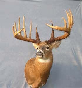 world's largest deer antlers picture 2