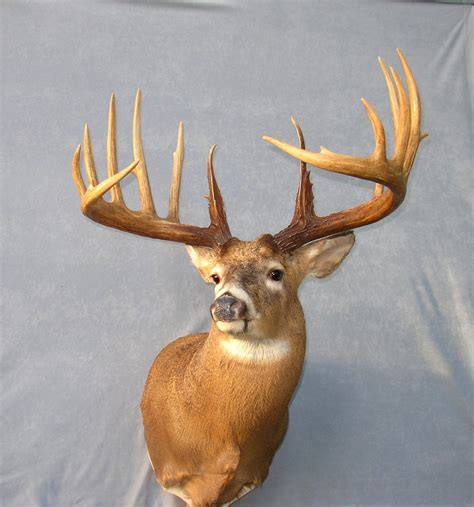 world record world's biggest deer rack picture 8