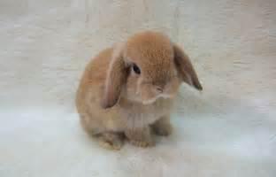 baby bunnies diet picture 17