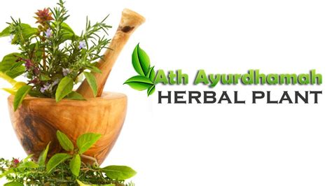 Which herbal plant is best for an picture 6