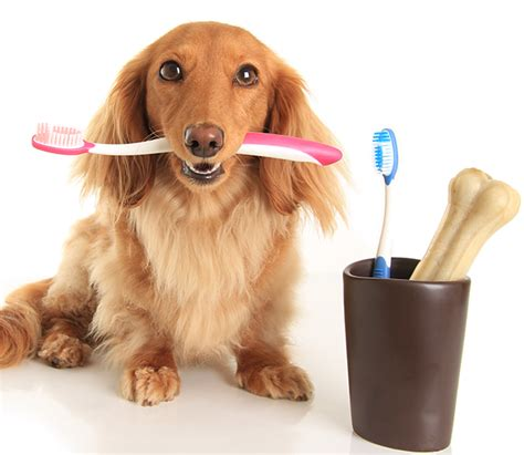 alternative dog teeth cleaning picture 1