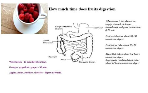 fruit digestion picture 5