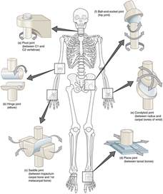 joint movements anatomy picture 10