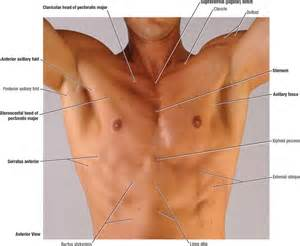 Chest muscle strain picture 1