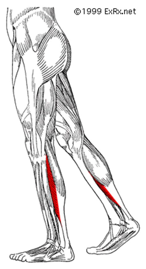 calf muscle pain picture 6