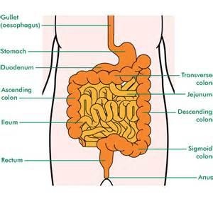 alimentum & many bowel movements picture 7