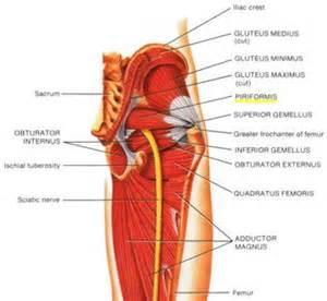 glute +pain trochanter +nerve picture 5