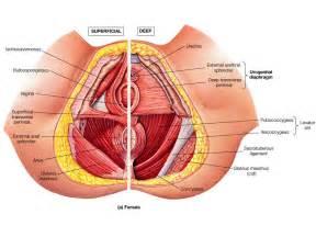 good bladder health picture 11