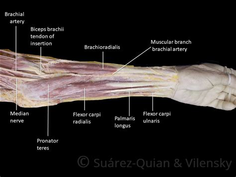 joint anatomy picture 7