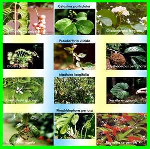 herbal plants price list pakistan picture 7