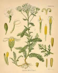 yarrow witchcraft picture 1
