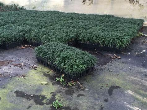 wholesale plants texas georgia pee picture 6