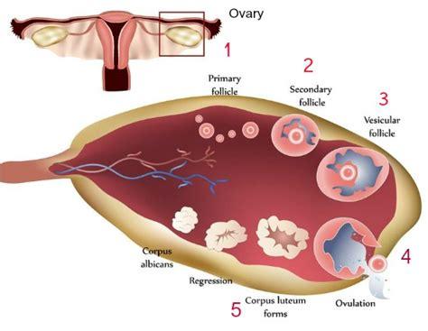 insufficient uterine enlargement picture 13