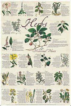 list of herbal medicine and uses picture 3