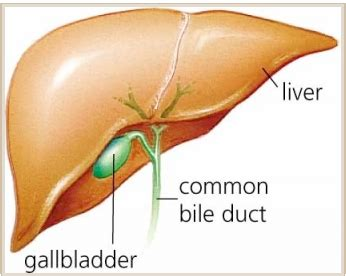 dissolve body fat from salt bile picture 6