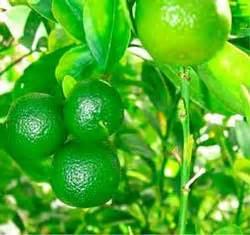 prutas at gulay mayaman sa vitamin c picture 4
