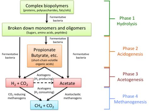 anaerobic digestion picture 18
