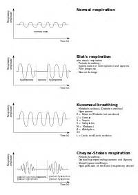 pontine sleep center and cheynes-stokes respiration picture 13