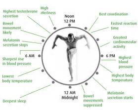 human sleep cycles picture 14