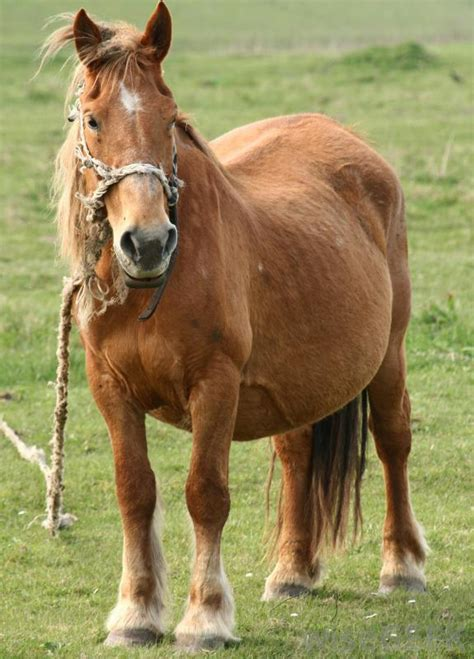 warts on horses picture 1