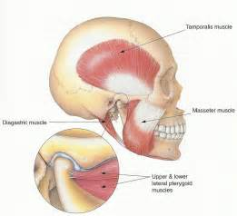 joint jaw pain relief picture 6