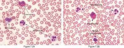 circulation of red blood cell picture 7