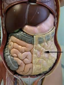diagram descending colon picture 15