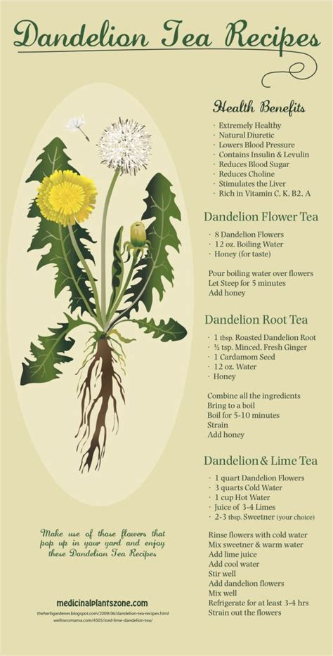 dandelion tea and herpes symptoms picture 3