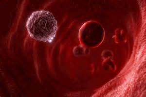 circulation of red blood cell picture 9