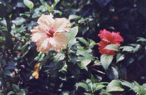 herbal para sa high blood picture 6