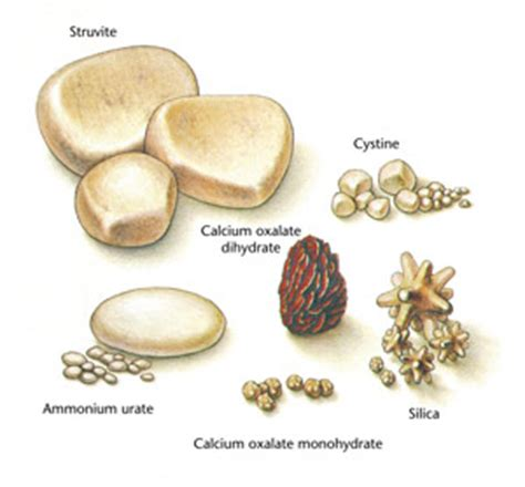 bladder stones in cats picture 6