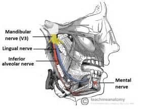 nerve damage h picture 5
