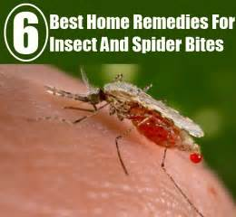 spider bite home remedy picture 7