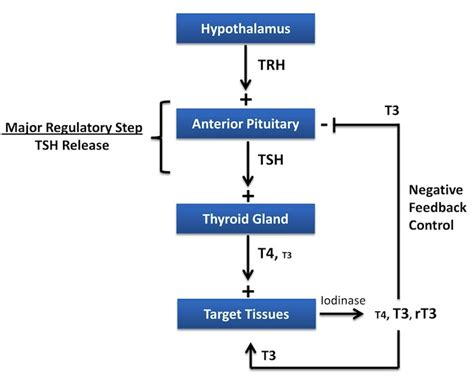 antone try t4 t3 protocol with hypothyroidism picture 7
