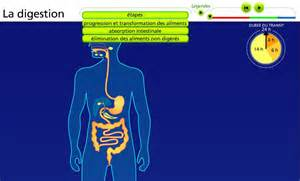digestion animation picture 5