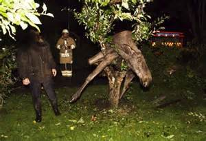 equine loss of appee picture 6