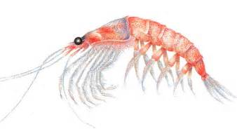 cholesterol and shrimp picture 5