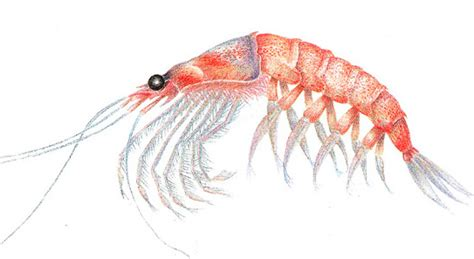 zone diet how many shrimp equal to 1 picture 7