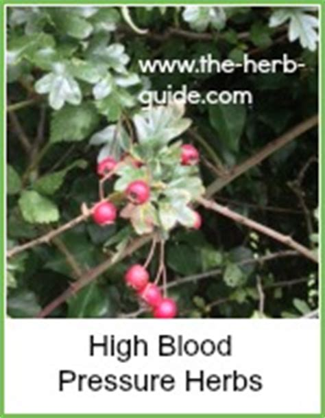 wiccan herbs for high blood pressure picture 11